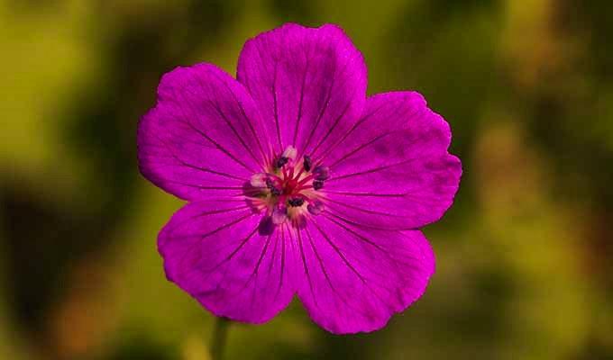 Blomstervandring