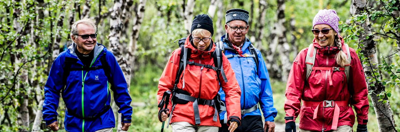Grupp äldre vandrare i björkskog längs Kungsleden