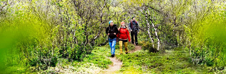 Tre vandrare i Björkskog längs Kungsleden