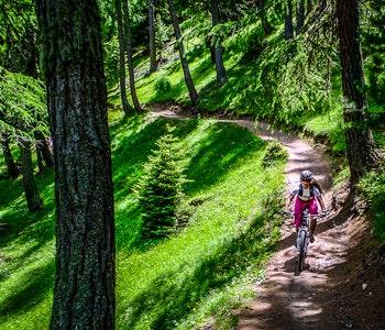 Mountainbike på skogsväg
