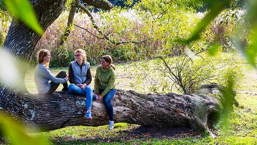 Tre personer sitter på en trädstam i Tyresö