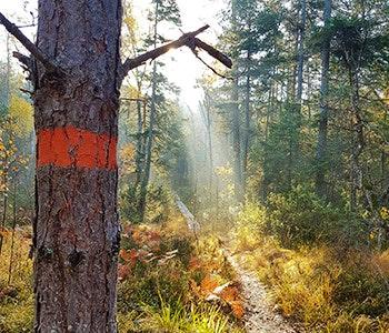 Sörmlandsleden markering på träd