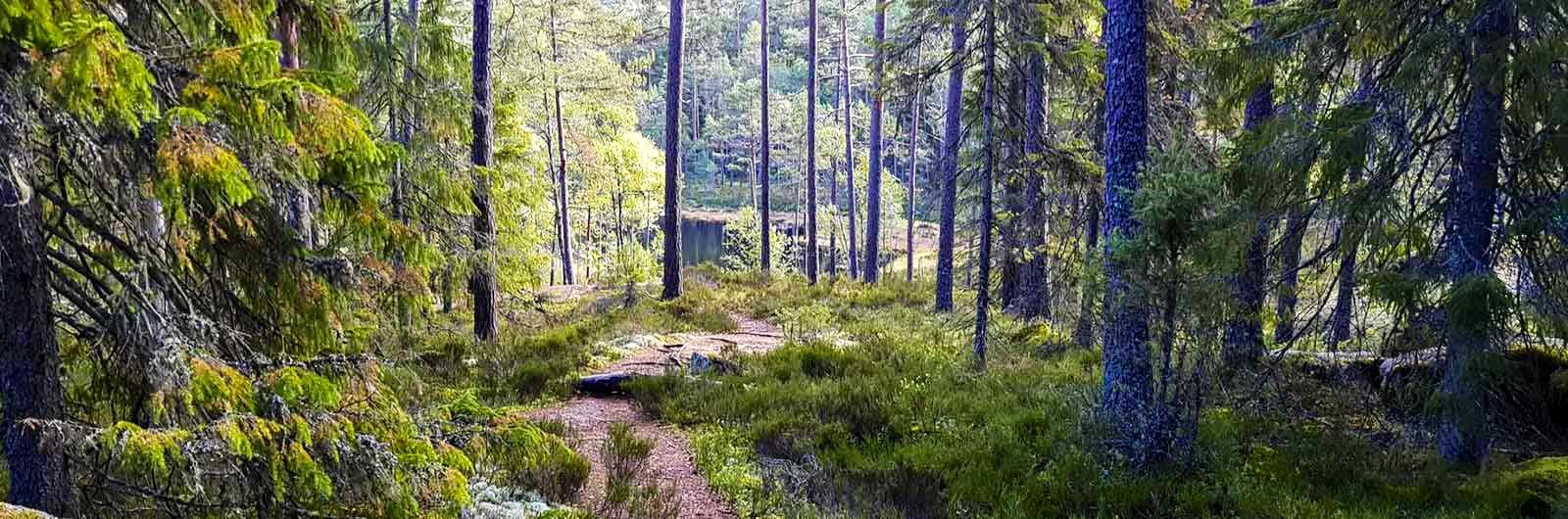 Djup skog vid signaturled Tiveden