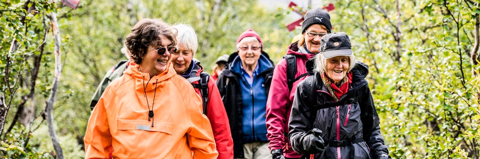 Grupp med äldre vandrare i björkskog