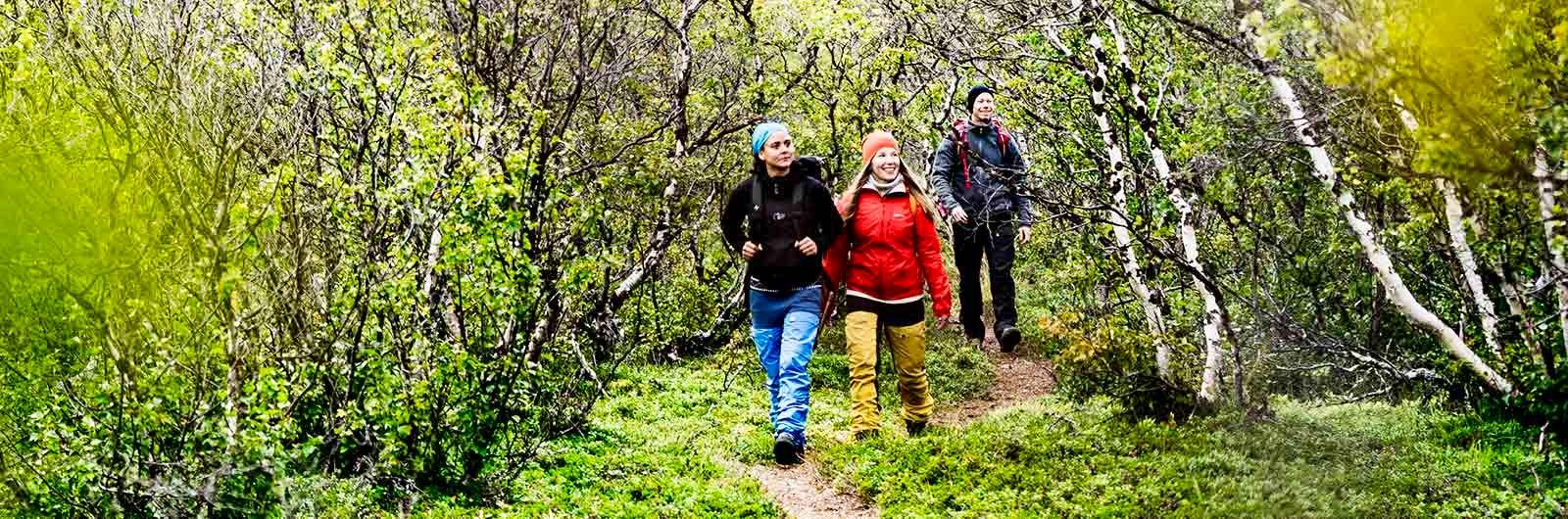 Vandrare i skogen på vandringens dag