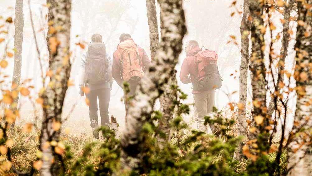 Tre vandrare i björkskog och dimma