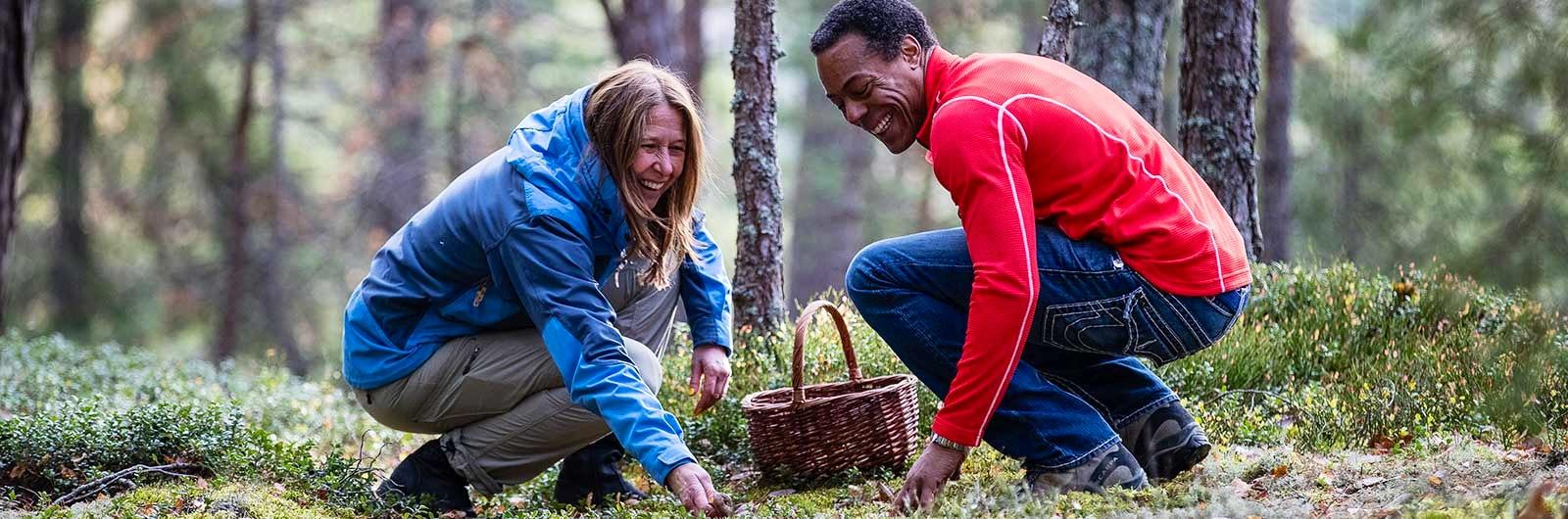 Två glada personer plockar svamp