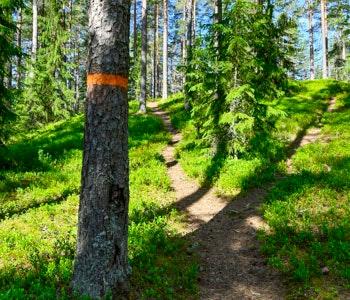 Ledmarkering på träd längs Hälsingeleden