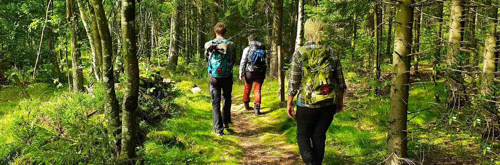 Tre personer vandrar i skogen längs sjuhäradsleden