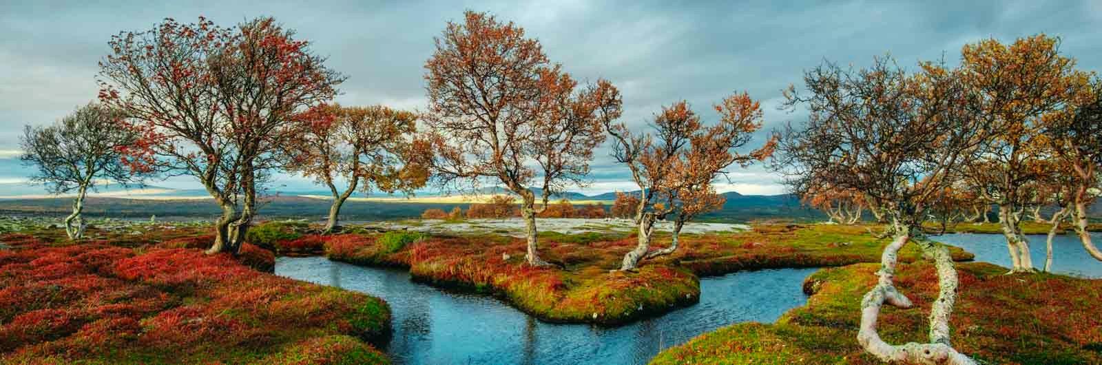 Höstfärgade träd speglar sig i sjö