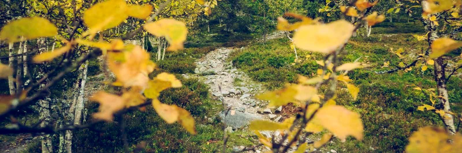 Höstfärger på vandringsleden Grövelsjön-Tänndalen