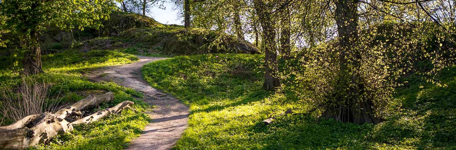 Skogsstig utanför Göteborg